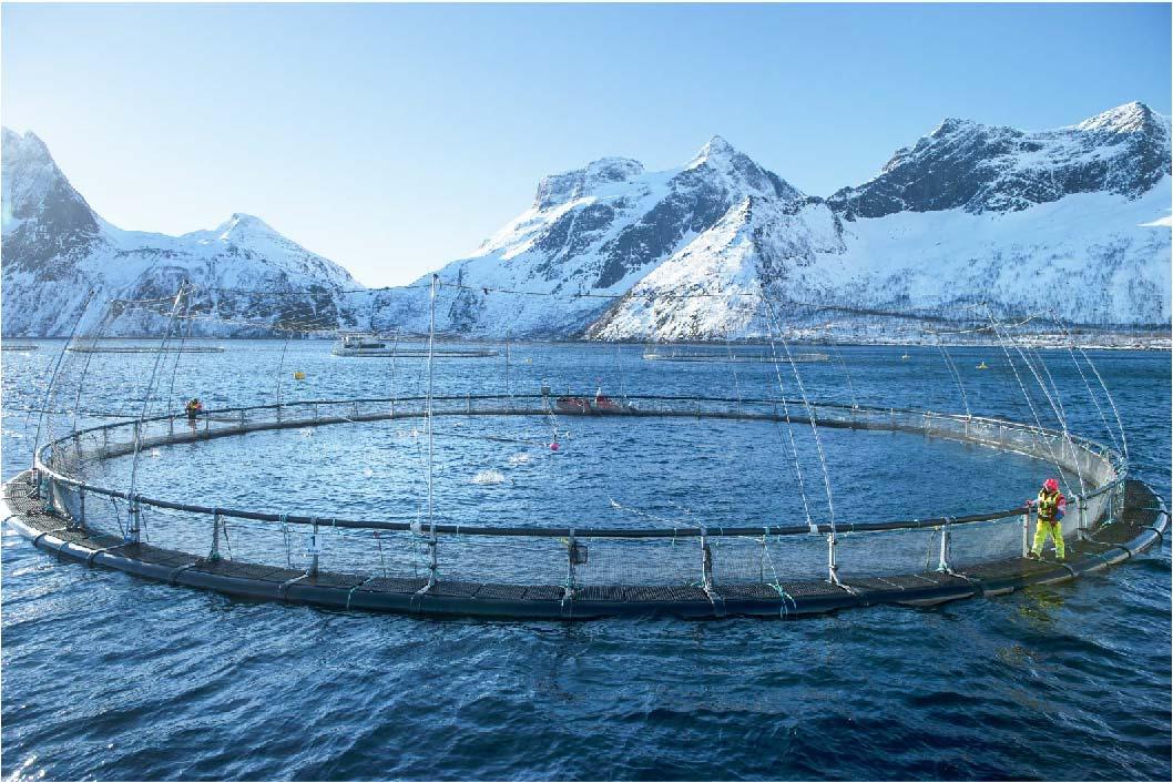 挪威鮭魚勇奪全球永續食物排名榜首